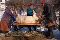 Julgrisen slaktas och skållas. Bild buggebloggen
